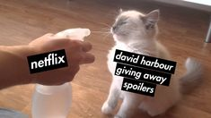 Spill the jopper tea David What Makes You Happy, Are You Happy, Stranger Things Have Happened, Strangers Things, Funny Relatable Memes, Best Shows Ever, Movie Quotes, Movie Tv, Tv Series
