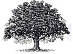 Oak tree tattoo- I love this but I would have added roots