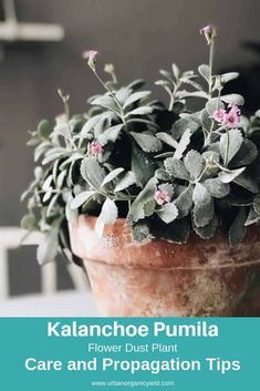 Idea Of Making Plant Pots At Home // Flower Pots From Cement Marbles // Home Decoration Ideas – Top Soop How To Water Succulents, Cacti And Succulents, Planting Succulents, Planting Flowers, Succulent Names, Propagating Succulents, Succulent Gardening, Cactus Plante, Pot Plante