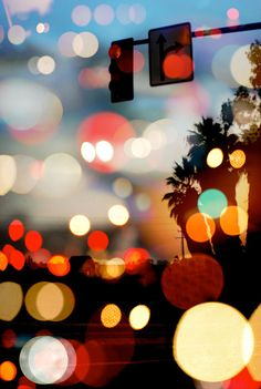 Lights, Night and Palmtrees
