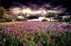 Wildseed Farms by dfikar1, via Flickr