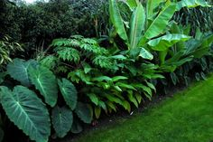 30 Top Tropical Garden Ideas 30 Top Tropical Garden Ideas 30 Top Tropical Garden Id . - 30 Top Tropical Garden Ideas 30 Top Tropical Garden Ideas 30 Top Tropical Garden Ideas Source by Fr -