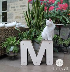 Les meubles pour chats HOMYCAT s'intègrent parfaitement avec les matériaux naturels et plantes vertes de la décoration. www.homycat.com