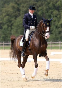 Bjorsells Briar <3 One of my favorite dressage horses! He can MOVE!