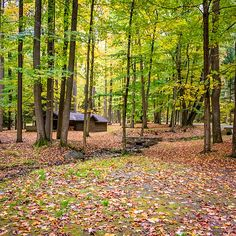 Beautiful Walking Path At Linn Run State Park Has Private Get Away Cottages  On Opposite Of Creek | Places Iu0027ve Been | Pinterest | Park, Pennsylvania  And ...