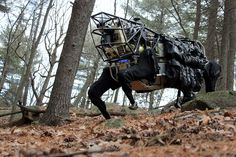 These are the latest chilling images of the Alpha Dog, the four-legged robot that DARPA, the U. defense agency responsible for the development of new technologies for use by the military, is developing. Communication Interculturelle, Google Team, Google Google, Video Google, Military Robot, Build A Robot, Robotics Companies, Boston Dynamics, Shopping
