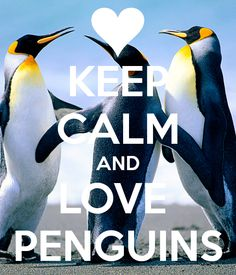 live & breathe penguins//all day everyday:)