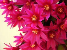 Beautiful shade of pink