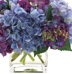 blue blue flowers pretties hydrangas