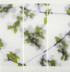 Jeri Eisenberg | Star Magnolia, Greening No. 2 | Archival pigment ink on Kozo paper infused with encaustic