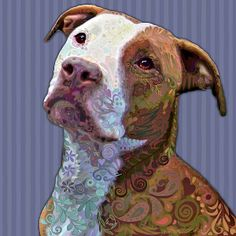 misunderstood How could anyone not love a Pitbull?