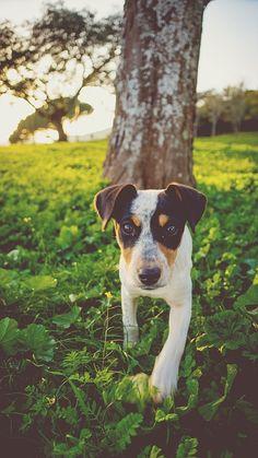 Vous avez envie d'adopter un chien et vous voulez savoir ce qu'il faudra faire pour le rendre heureux ? Découvrez les astuces de la rédac' dans cet article !
