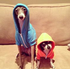 the real snoop doggs :D