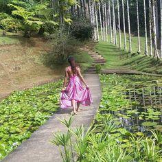 Repost from Instagram ! #WeLike ! #Madinina by @kncconcepts Jardin de Balata #martinique #lotus #jardindebalata http://ift.tt/1ZWukYq