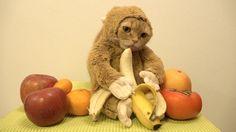Am 8. Februar begann das chinesische Neujahr mit dem Jahr des Affen im chinesischen Tierkreis. Zu diesem Anlass hat YouTube-Nutzer 10 Cats eine seiner Katzen ein Affenkostüm verpasst sehr zum Spott der anderen Katzen im Haus AUCH INTERESSANT: Filter by Post type Post Page Category Sort by Title Relevance Singen und tanzen auf dem [ ]