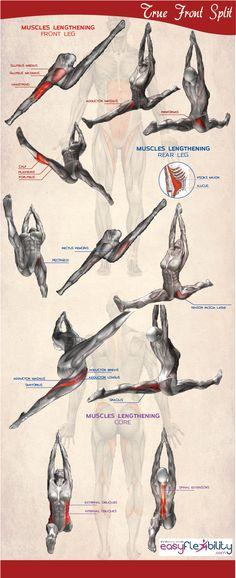 Split Front True Split Hip Squared Stretching Flexibility Training – EasyFlexibility.com