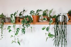 17 Popular Houseplants Even Brown Thumbs Can Grow Houseplants Safe For Cats, Types Of Houseplants, Indoor Trees, Indoor Plants, Indoor Gardening, Container Gardening, Chinese Money Plant, Orchid Pot, Asparagus Fern