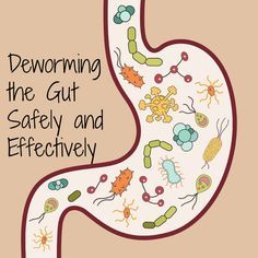 Deworming the gut naturally and safely. http://www.thehealthyhomeeconomist.com/natural-deworming-the-gut-safely-and-effectively/