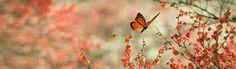 monarch-butterflies-on-rose-flowers-website-header.jpg (1024×300)