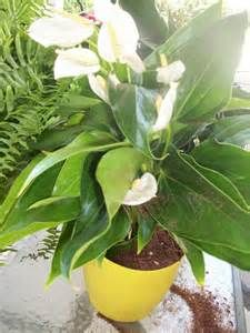 ... , Beautiful Indoor Plants: Beautiful Indoor Plants You Can't Kill