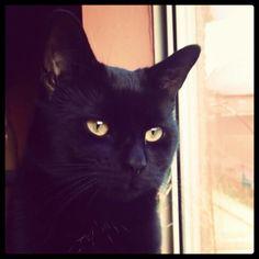 Hi World Domination, Cats, Animals, Gatos, Animales, Animaux, Animal, Animais, Kitty