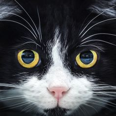 Look into my eyes by Emanuele Colombo on 500px