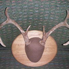 Mounting Deer Antlers - How To