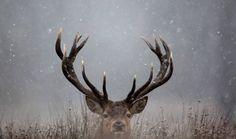 Moose ... perfecte picture voor op kussen in zetel ;)