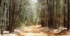 The Kanepuu Preserve is a nature preserve located on the northwestern plateau of Lanai Island, Hawaii. It is just six miles northwest of Lanai City and Lanai Island, Native Plants, Preserves, Hawaii, Places, Nature, Outdoor, Outdoors, Preserve