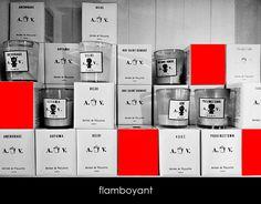flamboyant - florist donaflor Flamboyant, Flower Designs, Flowers, Florals, Flower, Bloemen