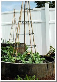 Trellis On Pinterest Bean Trellis Trellis And Beans 400 x 300