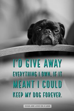 I'd Give Away Everything I Own If It Meant I Could Keep My Dog Forever Dog Dog Quotes Inspirational Quotes Funny Quotes Life Quotes Pug Love, I Love Dogs, Cute Dogs, Pugs, Animals And Pets, Cute Animals, Pet Loss Grief, Animal Quotes, Funny Quotes
