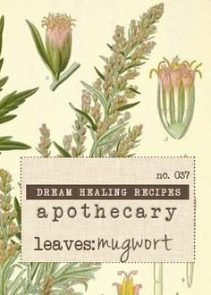7 Ways to Dream with Plants - The DreamTribe