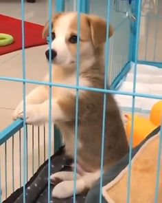 No one wanna play with me - Cutest Baby Animals Cute Funny Animals, Cute Baby Animals, Funny Cute, Funny Dogs, Animals And Pets, Cute Cats, Cute Animal Videos, Funny Animal Pictures, Cute Dogs And Puppies