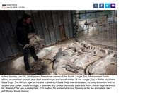 EVERYONE SUFFERS - INCLUDING THE ANIMALS!! PLEASE SIGN:   Save the starving animals of the Gaza Zoo!!