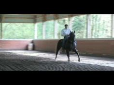 Gaited Horse Training: Lateral cues in gait!