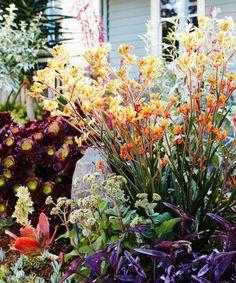 The prettiest of gardens #blackpepper #gardendesign #flowersofinstagram #inspiration