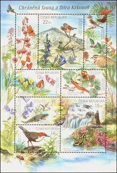 Fauna a flora Krkonoš