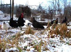 A Homesteading year of tasks