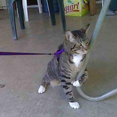 41-chats-qui-regrettent-leur-choix-40