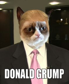 Grumpy cat's favorite part of CELEBRITY APPRENTICE? You're fired!