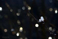 Winter / David Fuller Photo  (by TheFullerView)