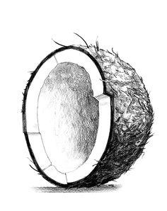 coconut illustration - Google Search