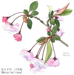 Asia, Japan, Drawings, Artist, Plants, Summer, Summer Time, Artists, Sketches
