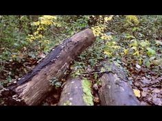 Journey by Emily Hunter Digital Film, Journey