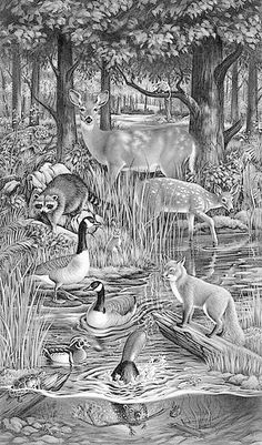 Coloring Page For Adults Forest Animals