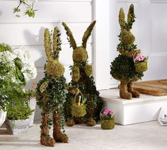 Pottery Barn Live Ivy Bunny with Basket Topiaries