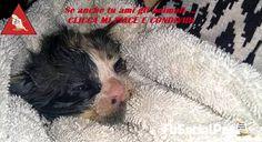 Gettata senza pietà nel water e intrappolata nello scolo delle fogne, chiedeva aiuto per non affogare