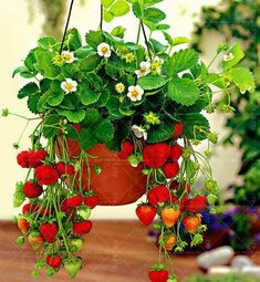 300PCS Bonsai Strawberry Seed Super sweet fruit seeds Organic healthy perennial plants for garden balcony High nutritional value