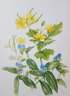 까실의 식물과 그림 이야기